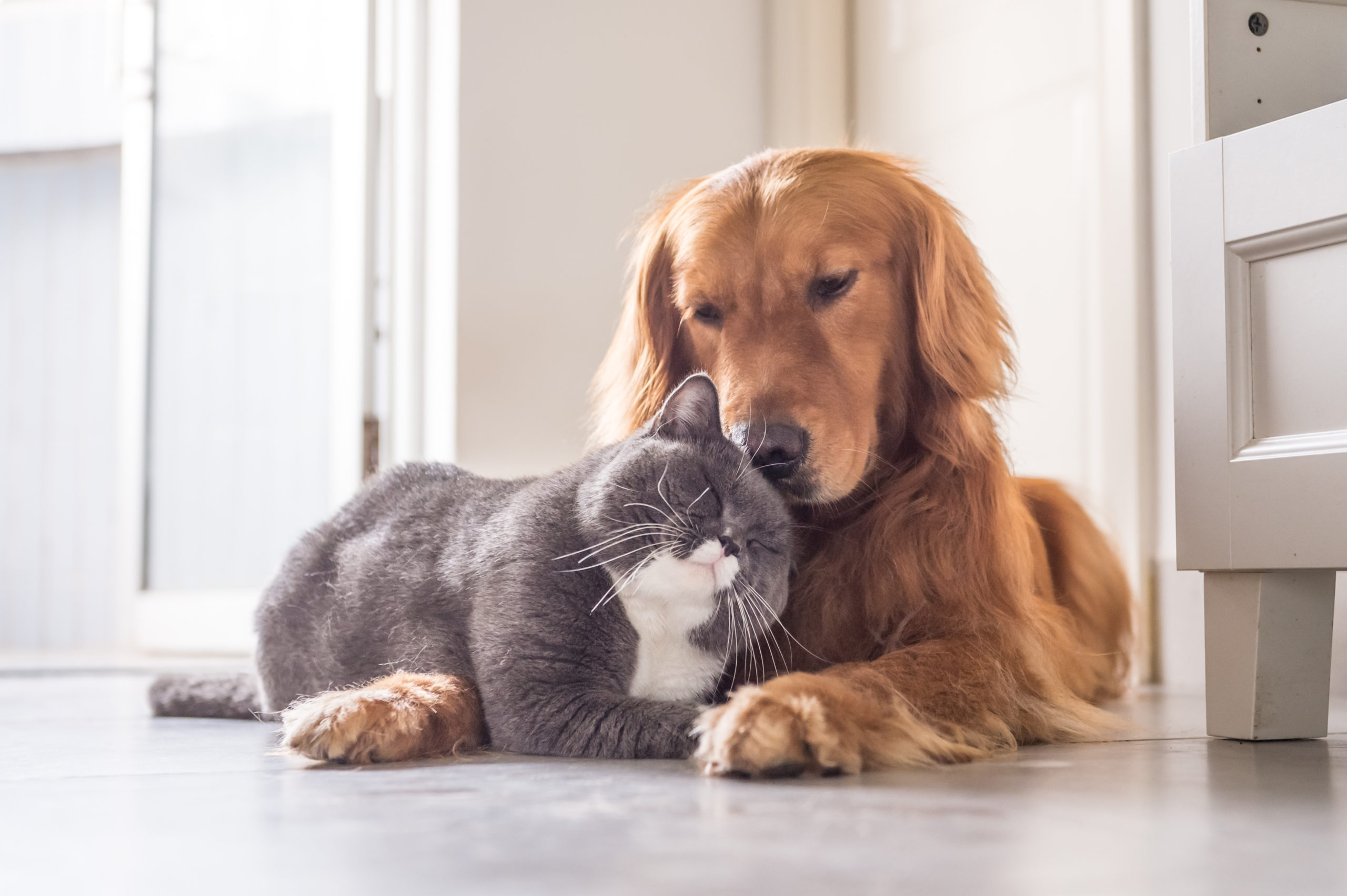 adopt cats and dogs